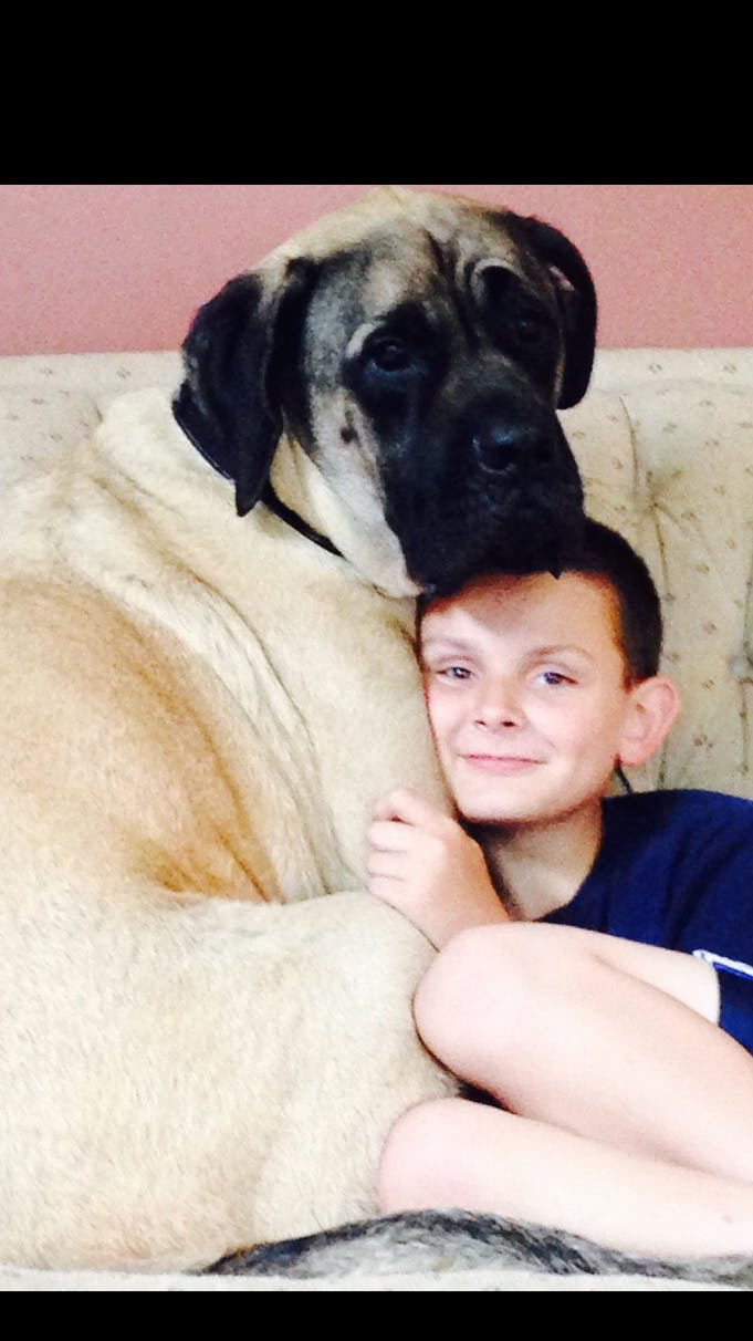 Sarge's name story for Old English Mastiff Dog Names