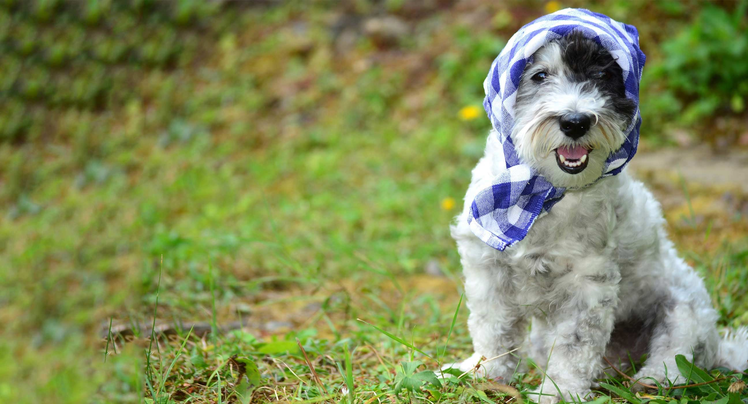 Old fashioned dog names 45