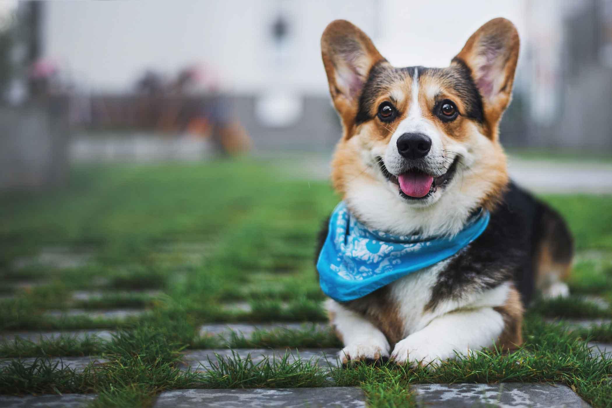How To Walk A Big Dog