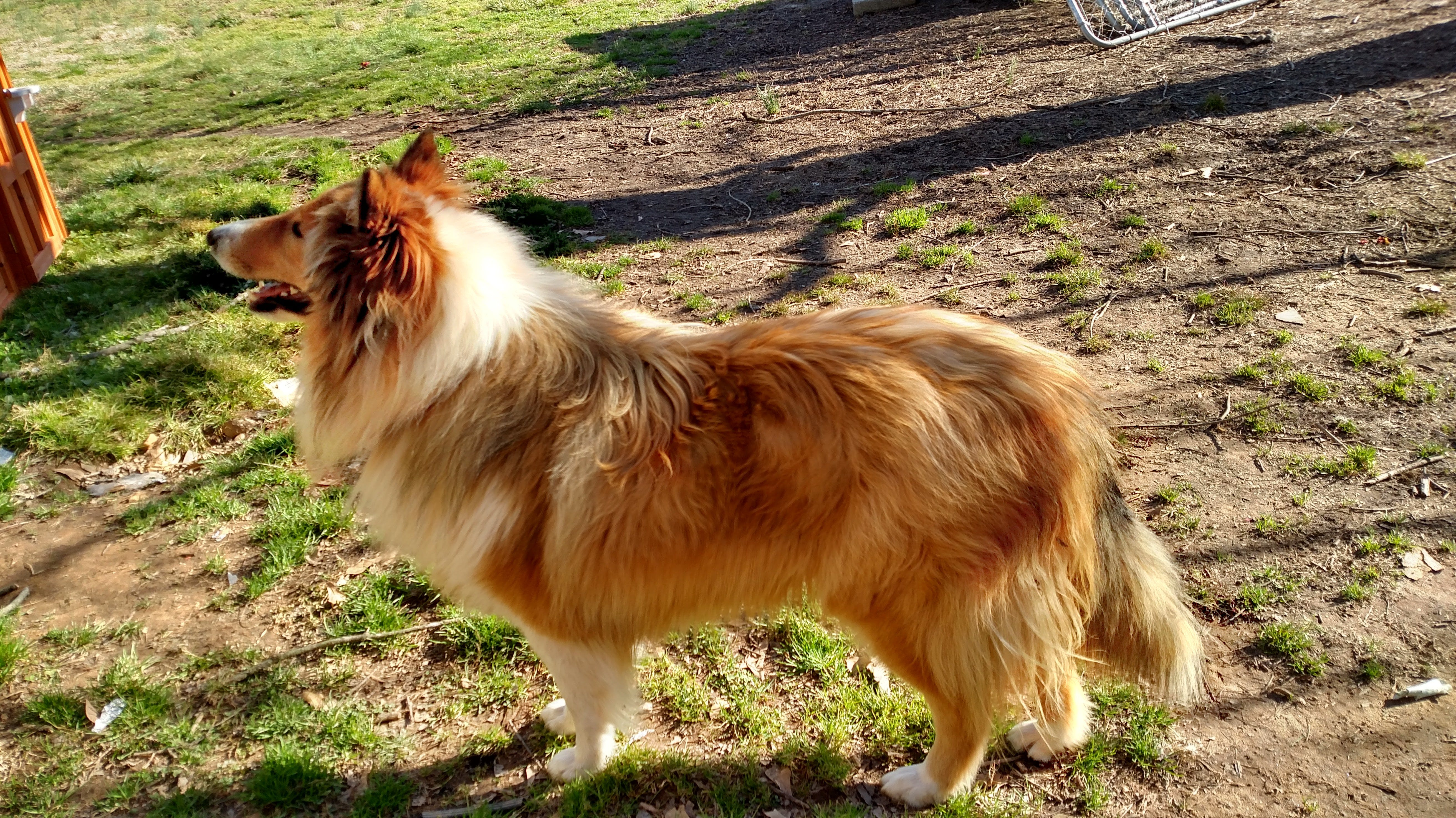 Trusty's name story for Rough Collie Dog Names