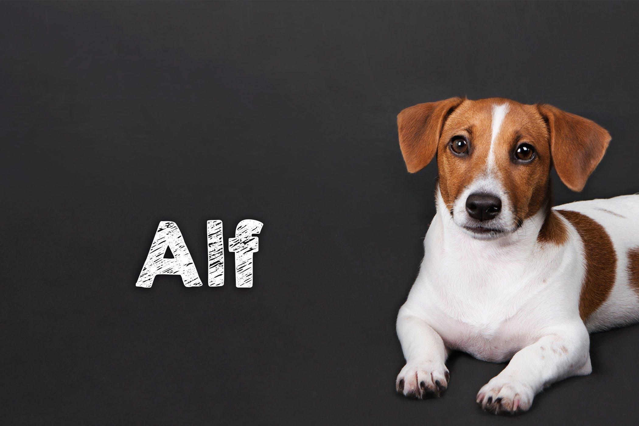 такому имена собак с картинками пусть
