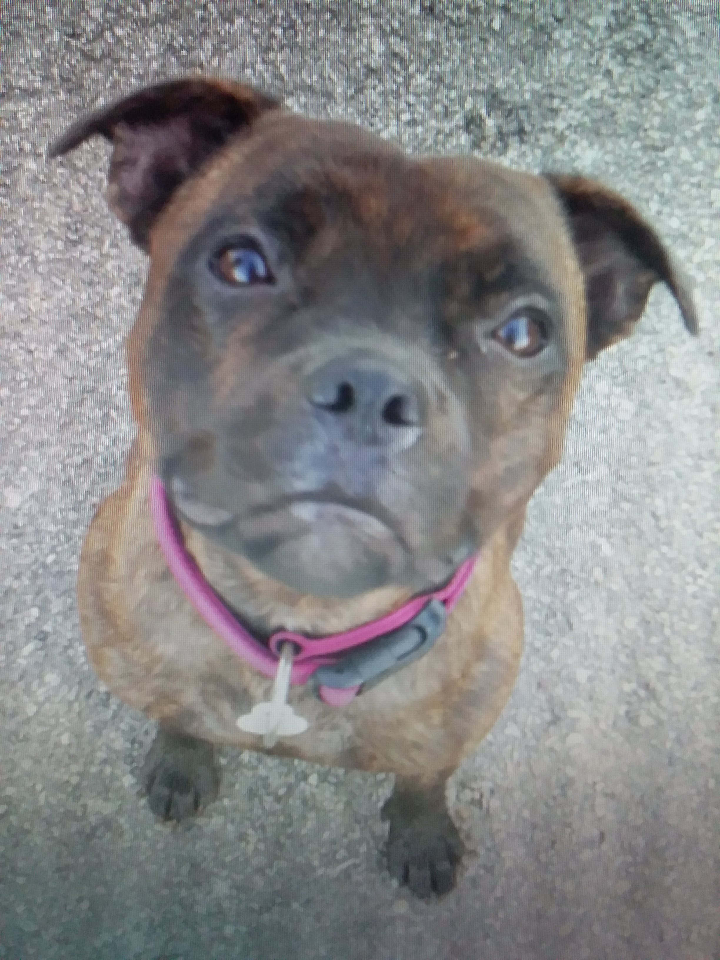 Nyx's name story for Staffordshire Bull Terrier Dog Names