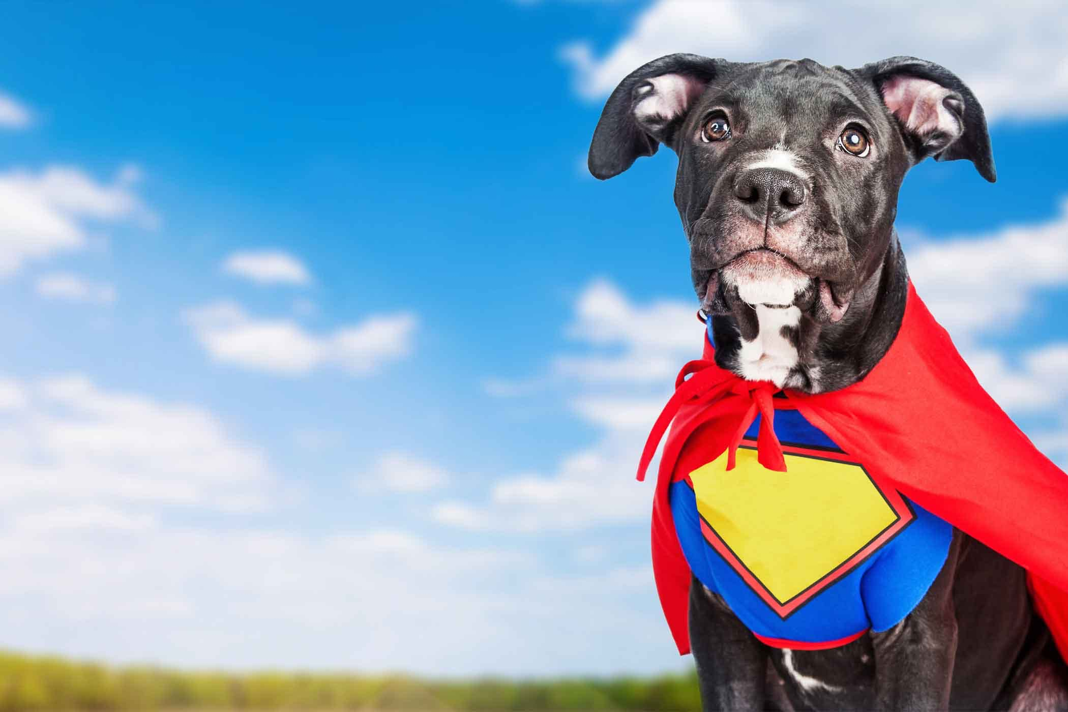 Mythical Creature Inspired Dog Names   Popular Male and
