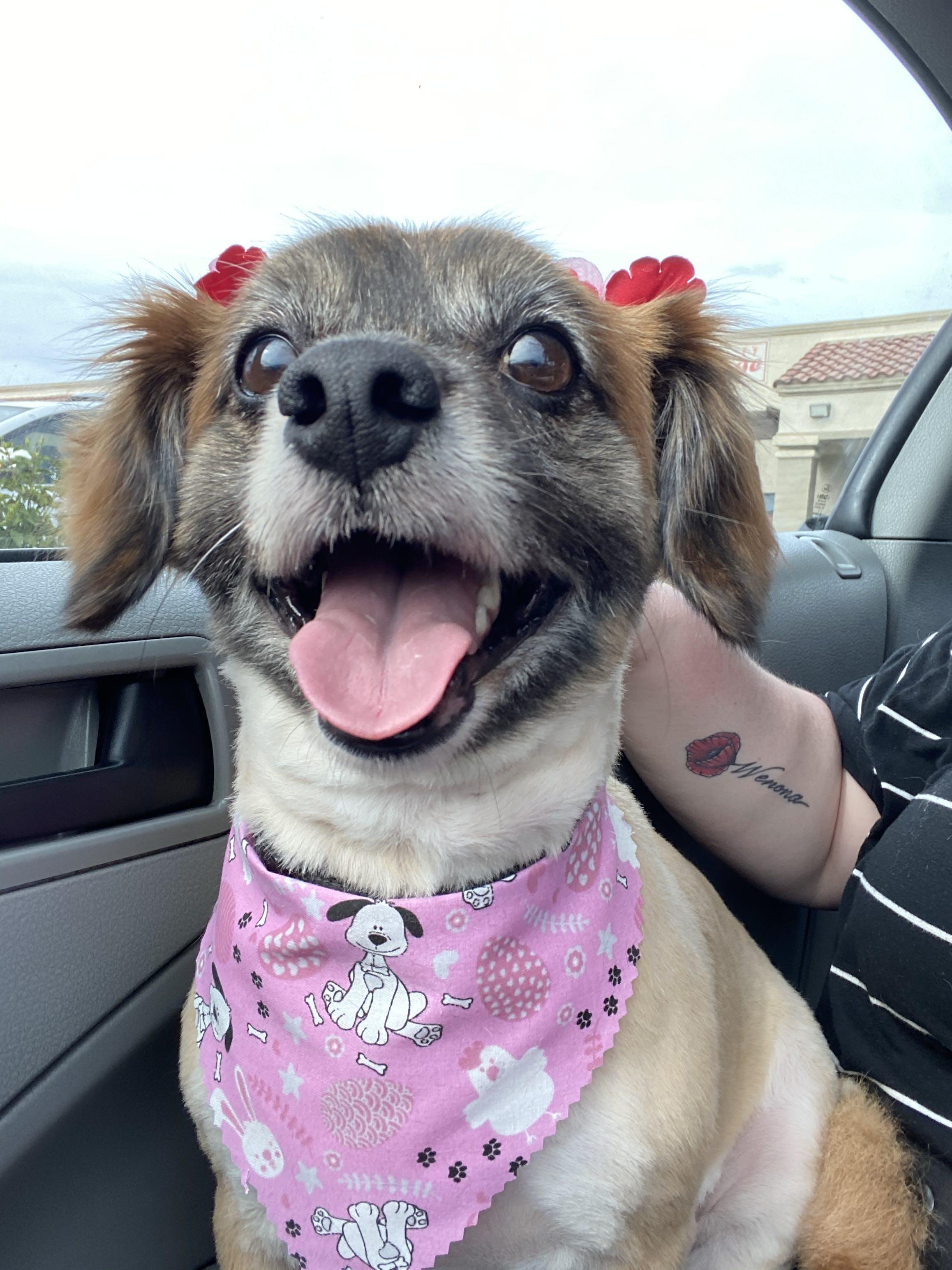 Chai's name story for Tea Inspired Dog Names