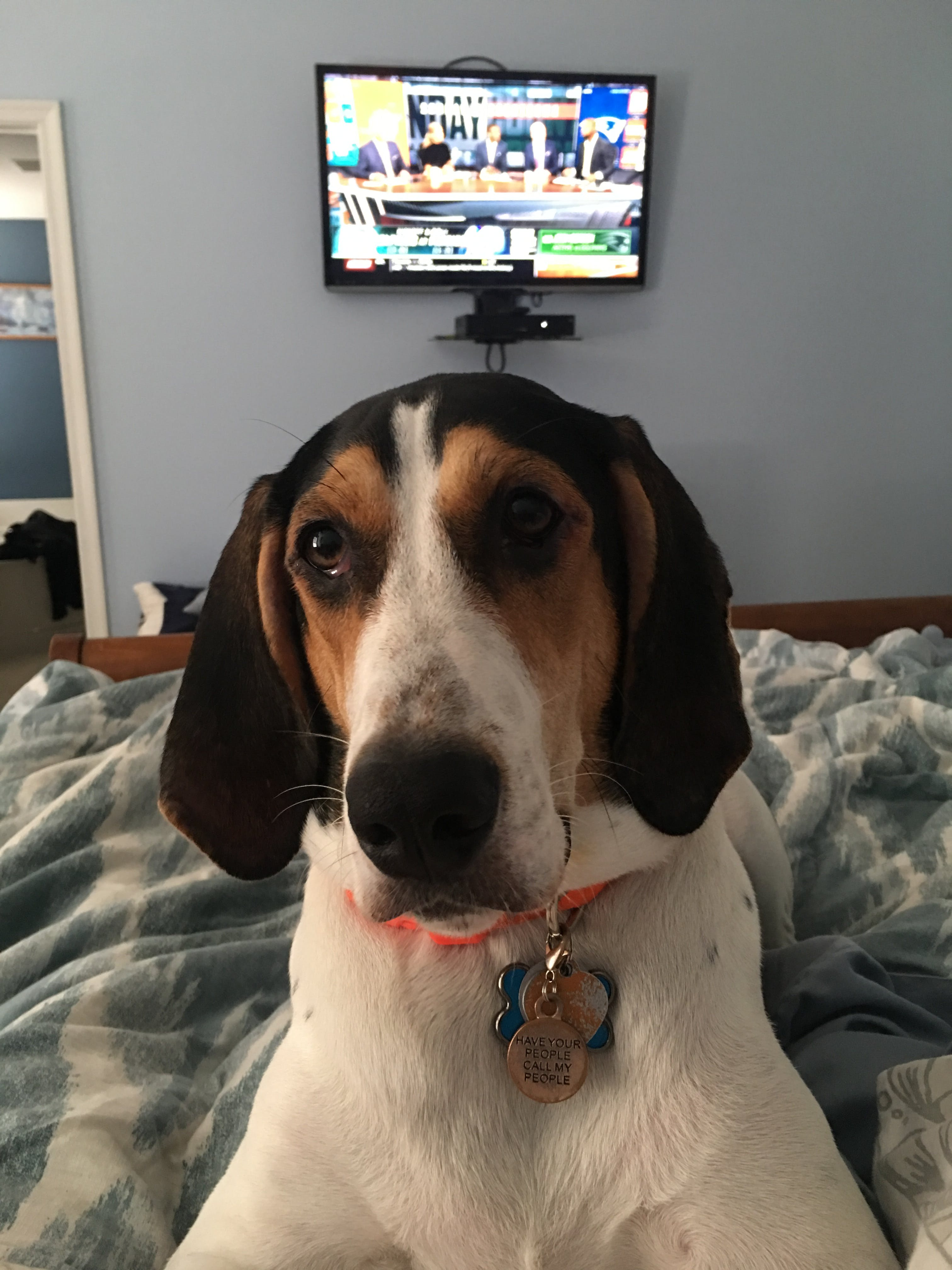 Odie's name story for Treeing Walker Coonhound Dog Names