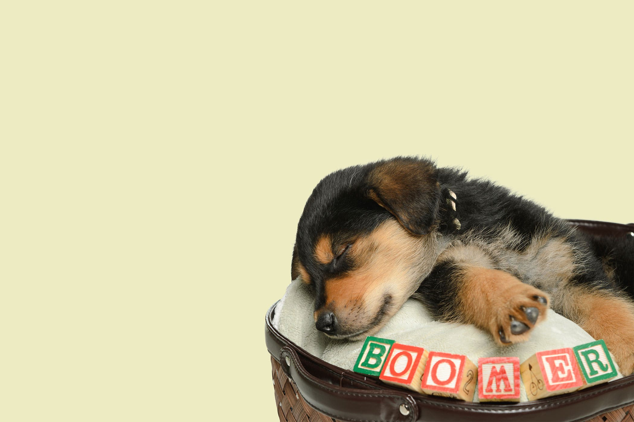 Two Syllable Dog Names | Popular Male and Female Names | Wag!