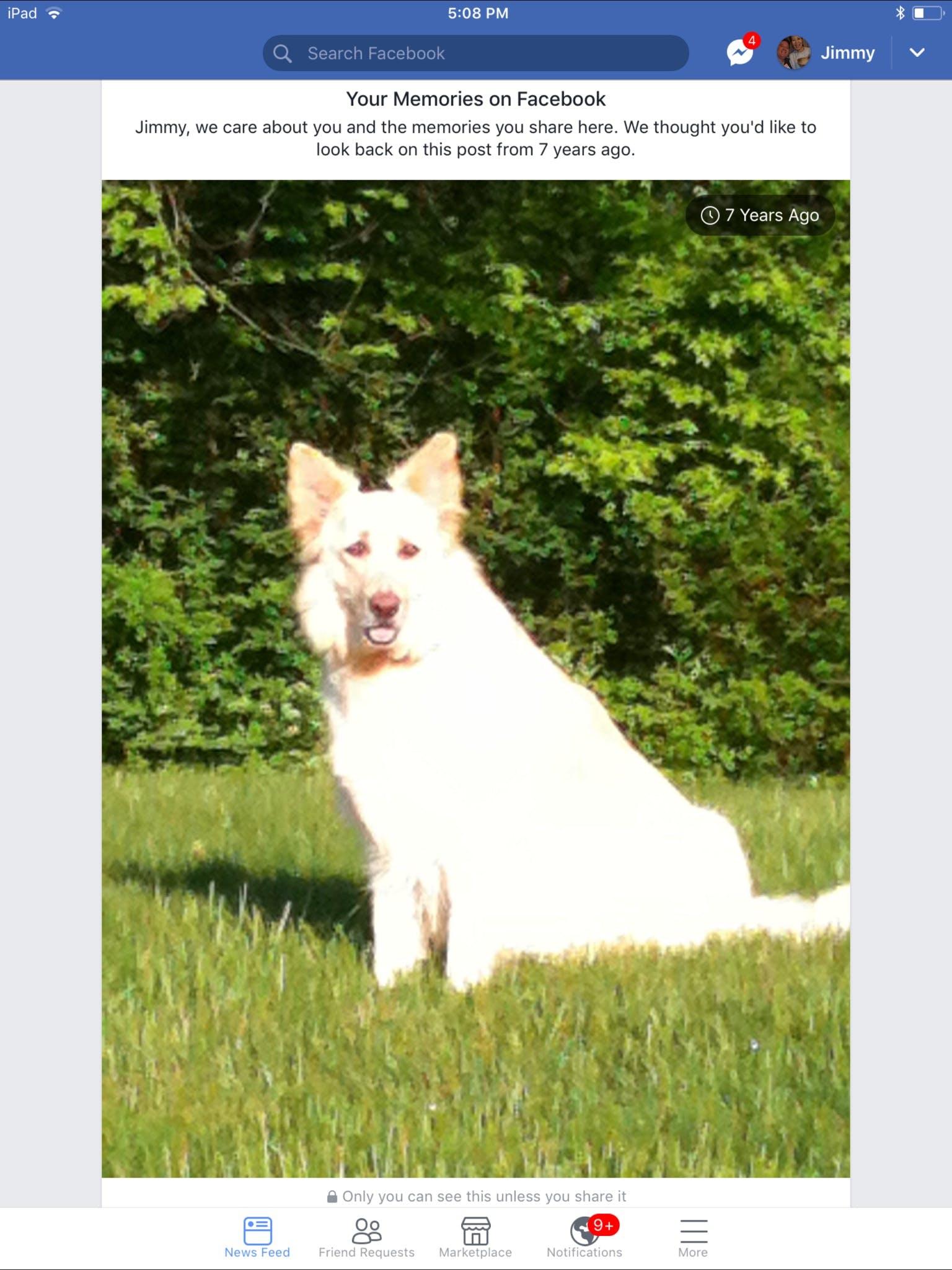 Bindi's name story for White German Shepherd Dog Names