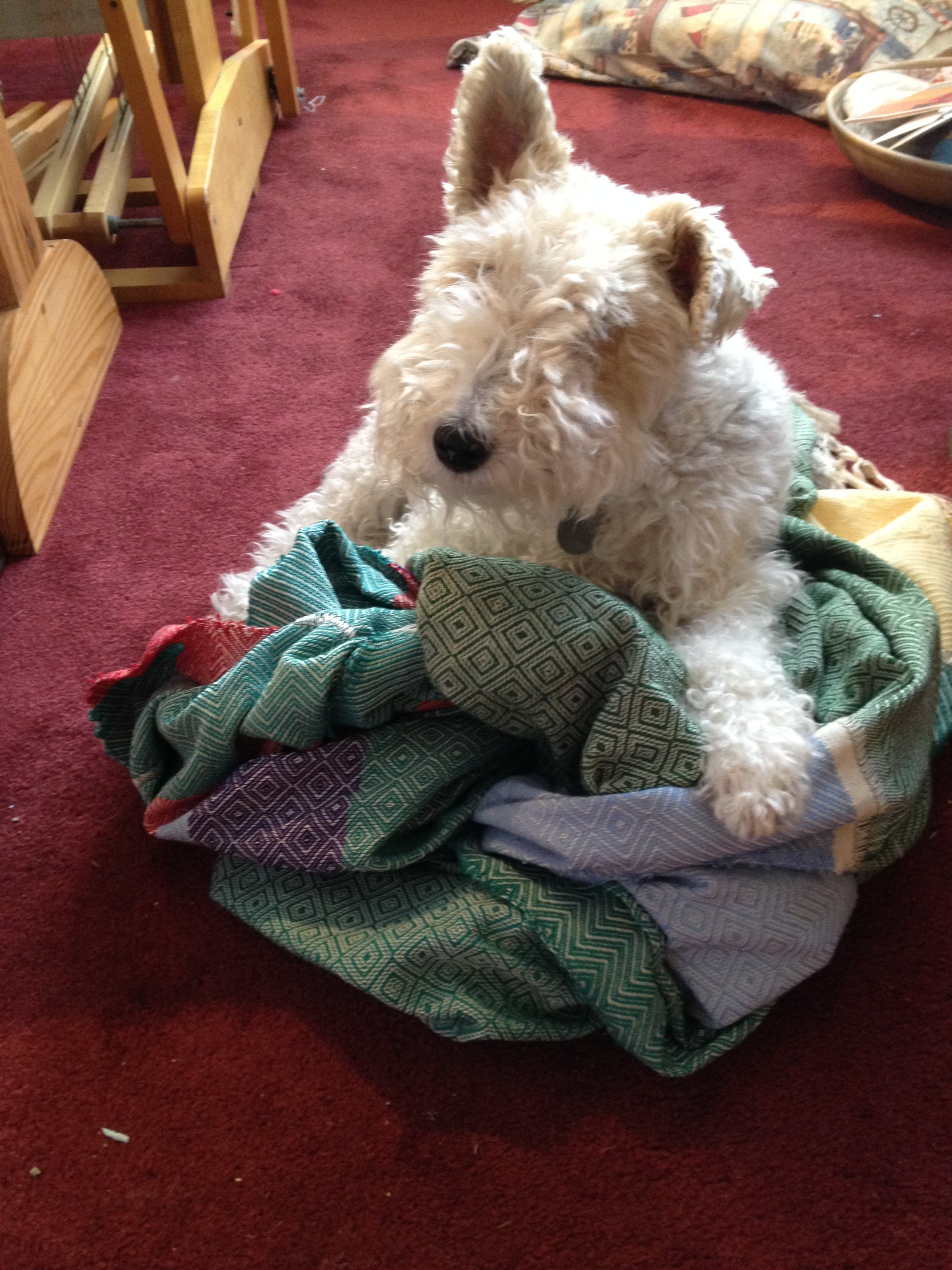 Scarlett violet twinkle's name story for Wire Fox Terrier Dog Names