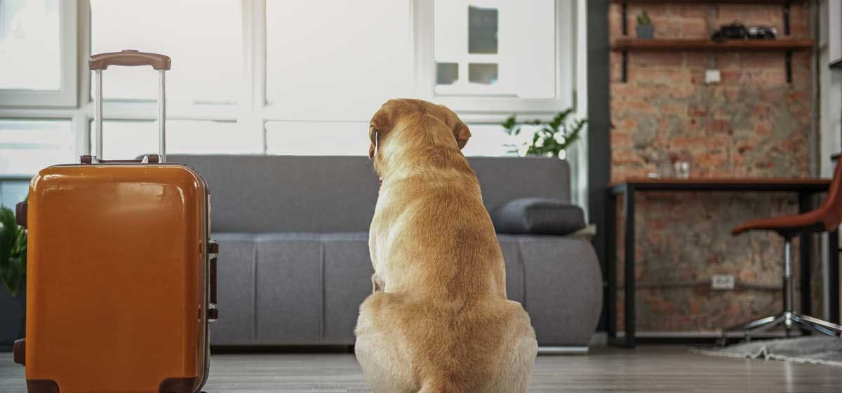 History Of Can Dogs Live In Apartments
