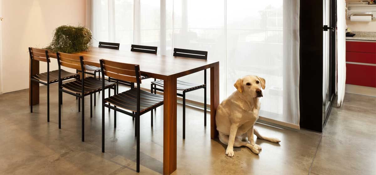 Introduction Of Can Dogs Live In Apartments