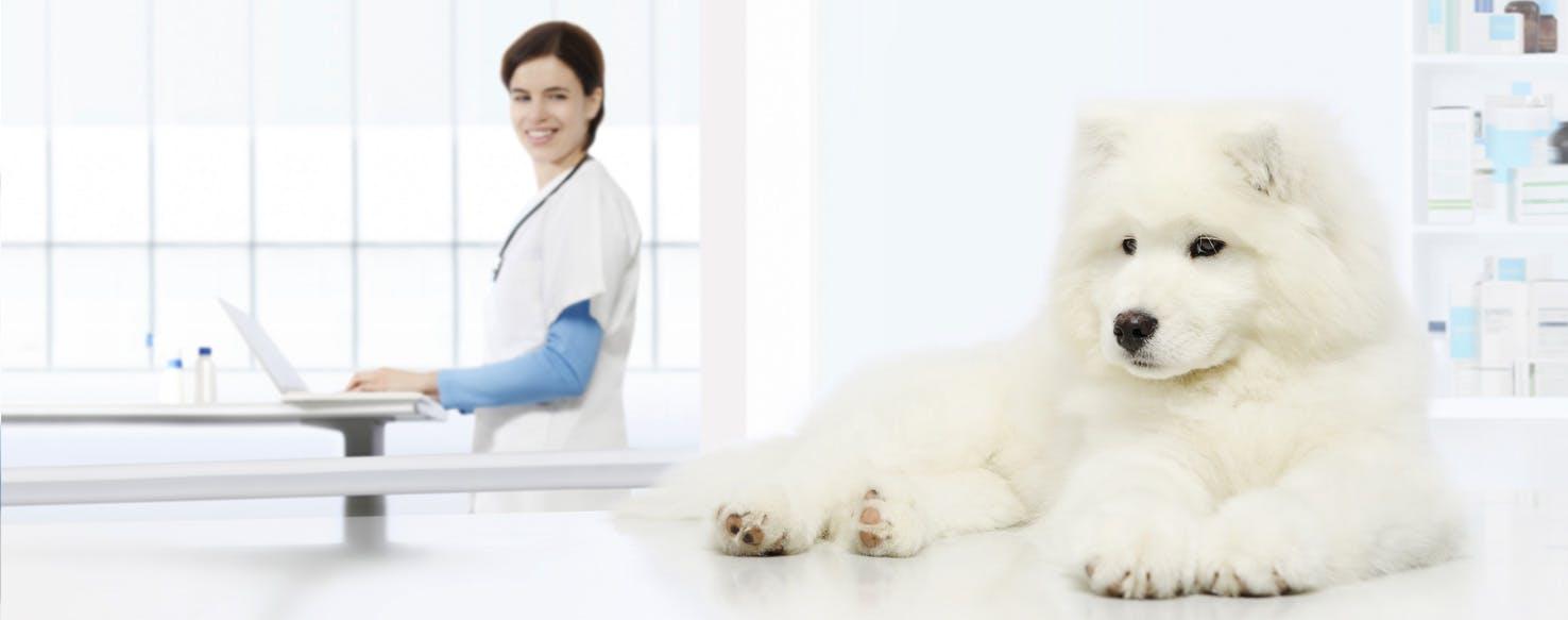 Food Allergy Symptoms In Dogs Shaking Head