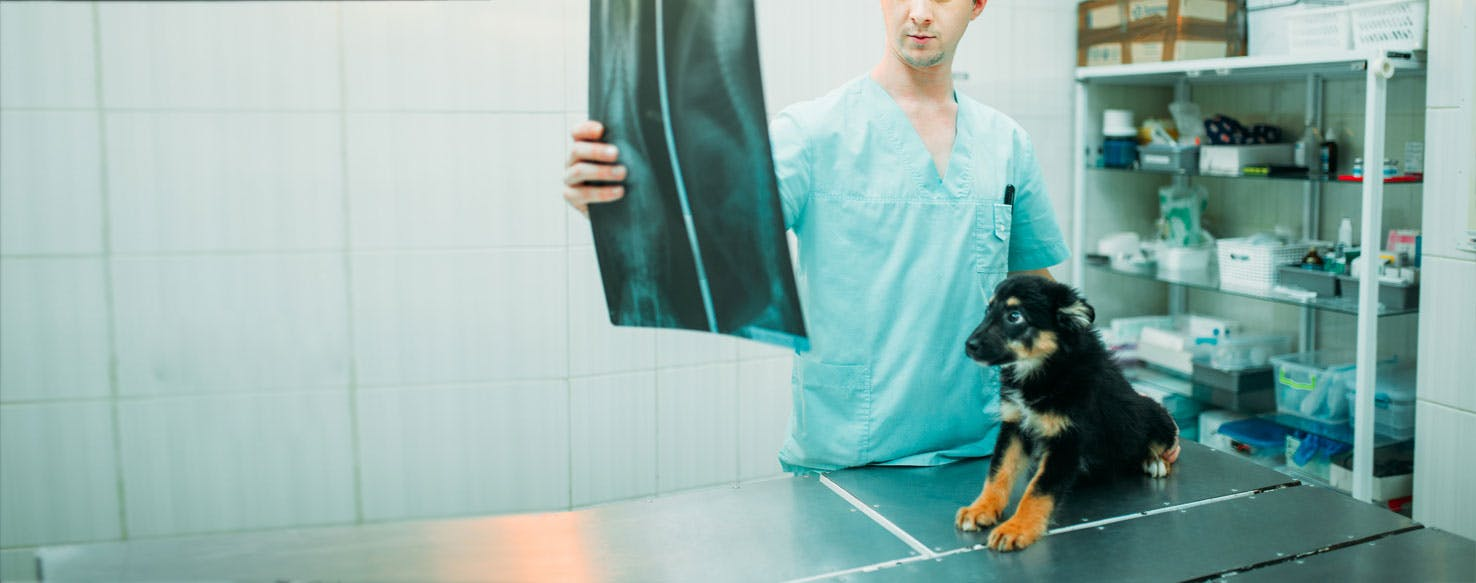 Can Dogs Live With Hernias? - Wag!