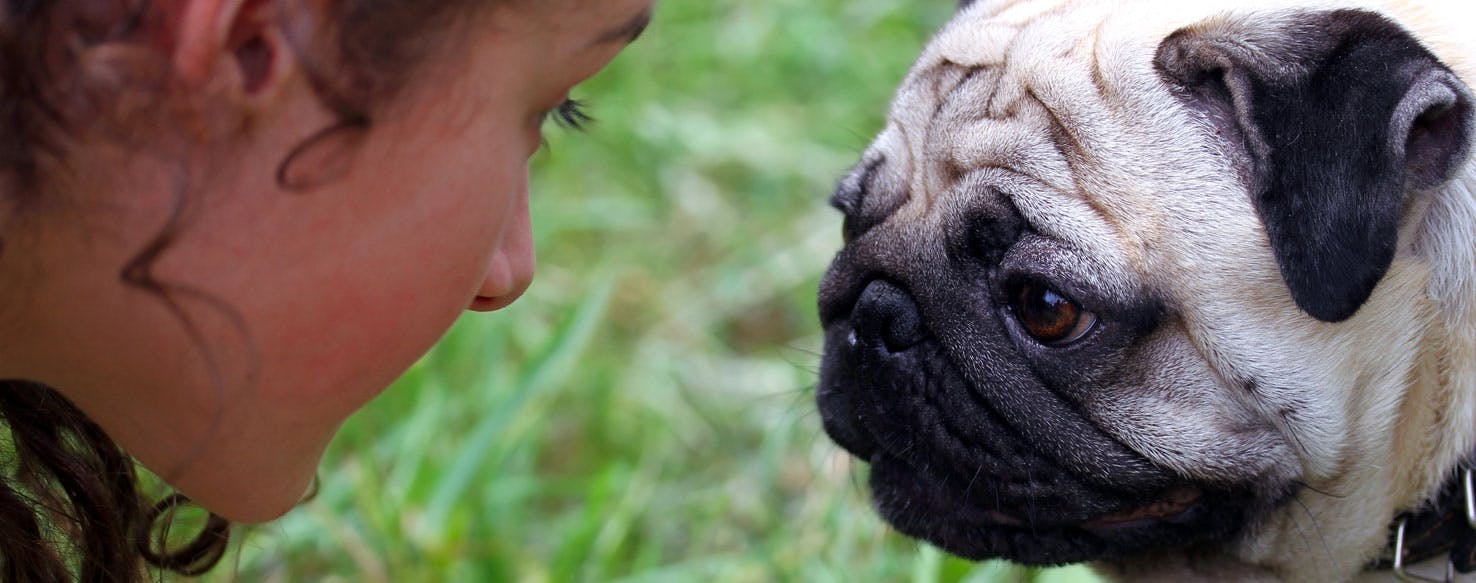 Can Dogs Understand Human Barking? - Wag!