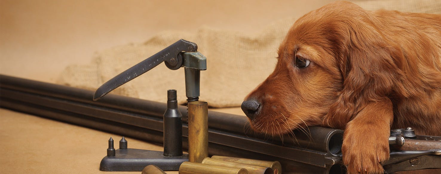 Can Dogs Smell Ammunition Wag