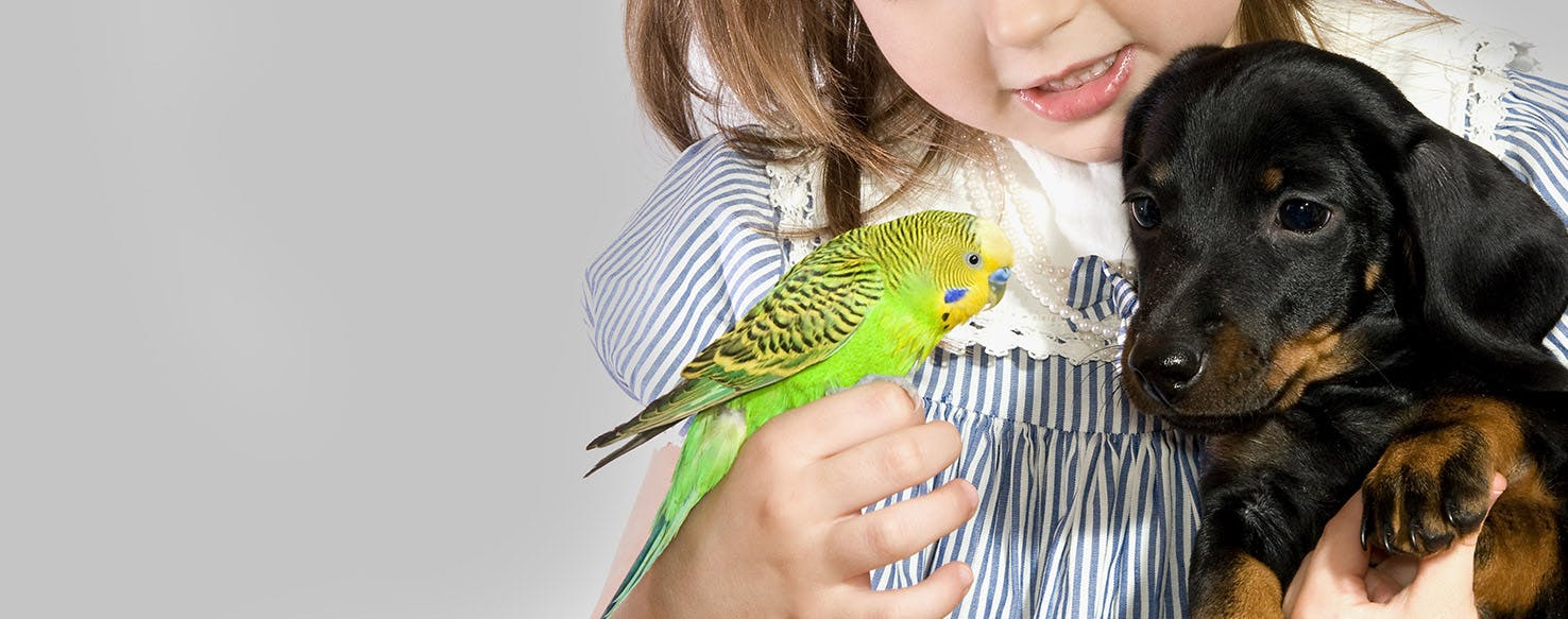 Can Dogs Live With Parrots? - Wag!