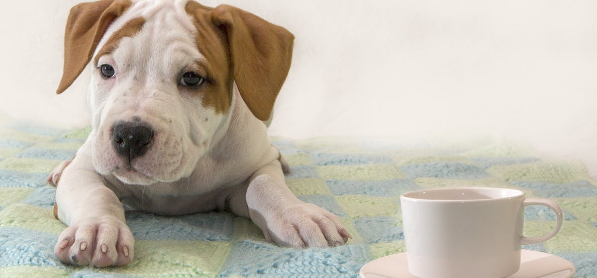 Can Dogs Smell Drugs Through Coffee? - Wag!
