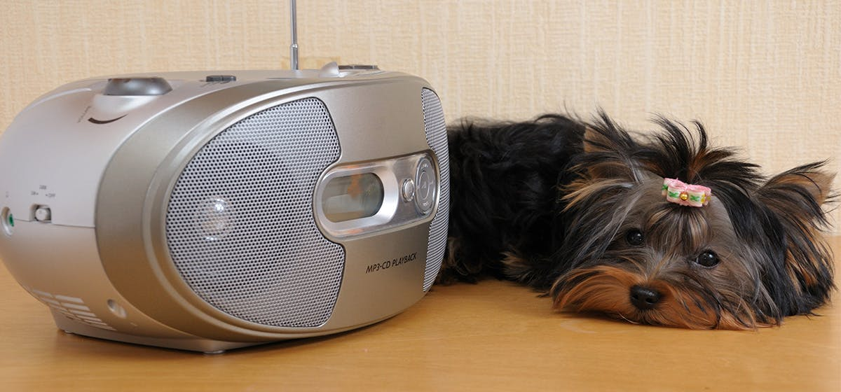 Can Dogs Hear Ultrasonic Sound? - Wag!