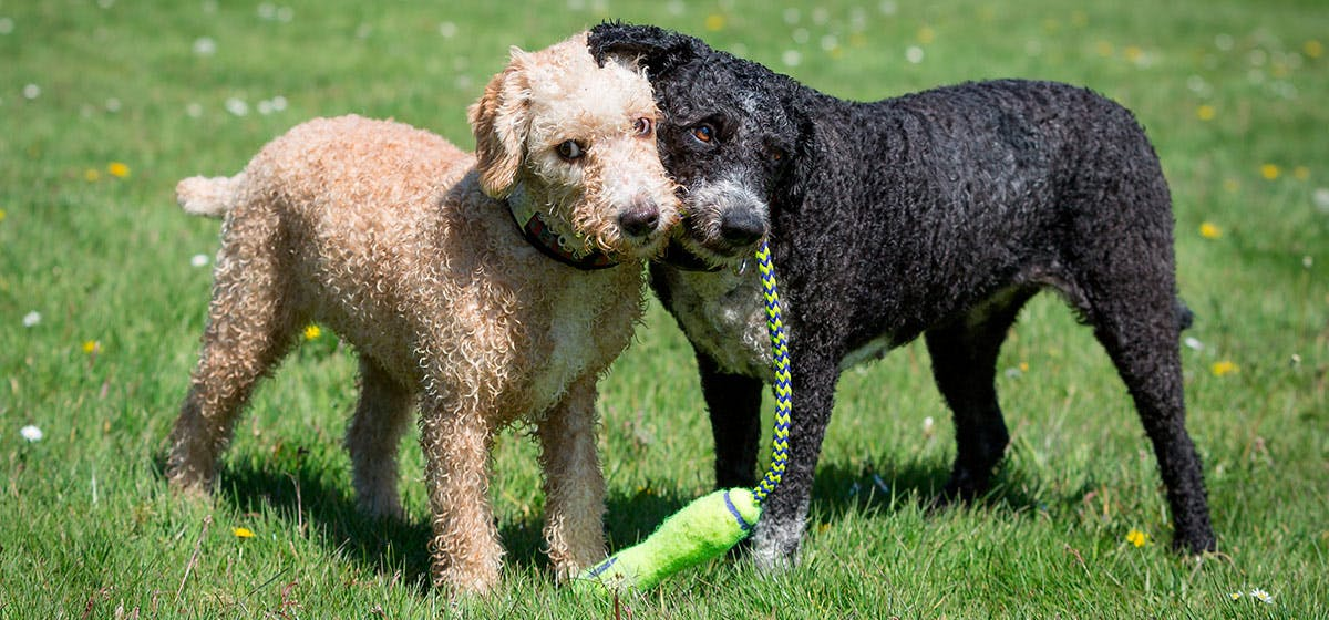 Can Dogs Remember Their Siblings? - Wag!