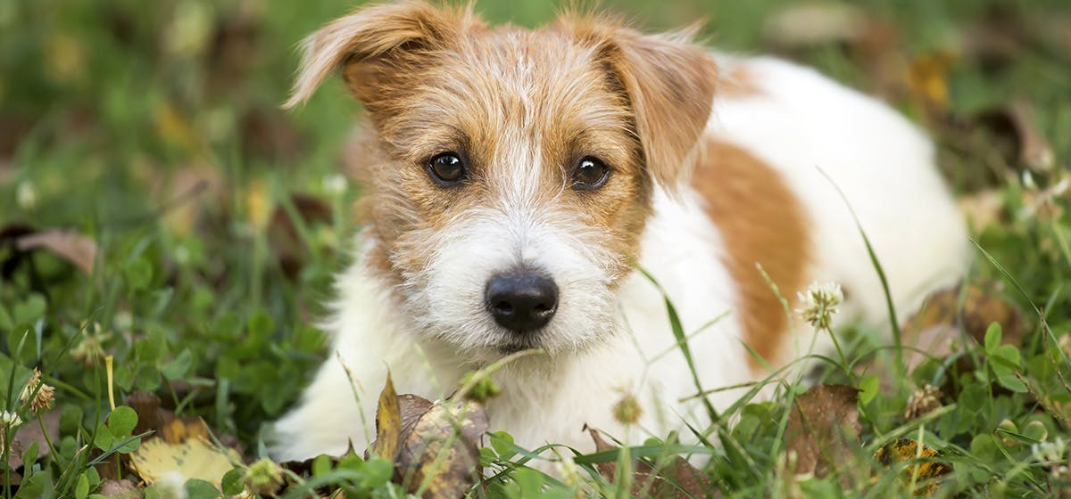 Can Dogs Use Human Ear Drops? - Wag!