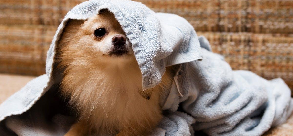 Can Dogs Sense Bad Spirits Wag