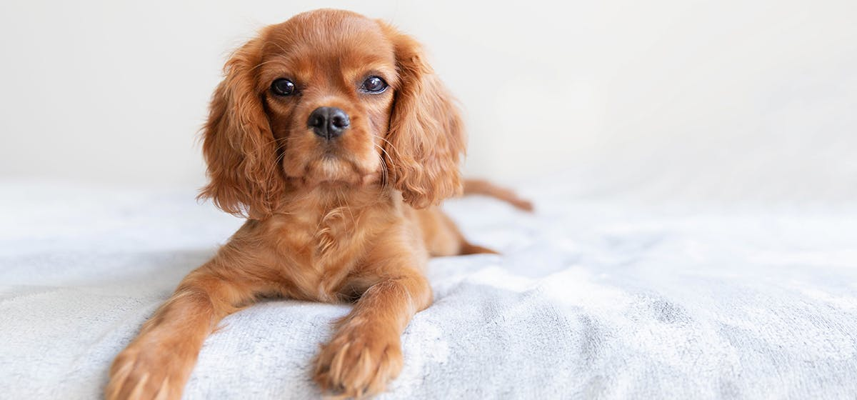 Can Dogs Smell Alive and Dead Bed Bugs? - Wag!