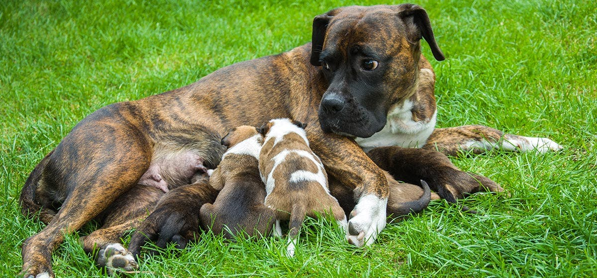 Can Dogs Remember Their Mothers? - Wag!