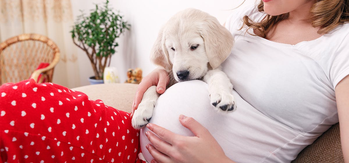Introduction of Can Dogs Sense a Baby in the Womb?