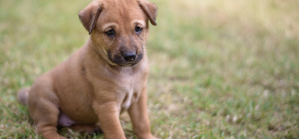 Can Dogs Live With Parvo Wag