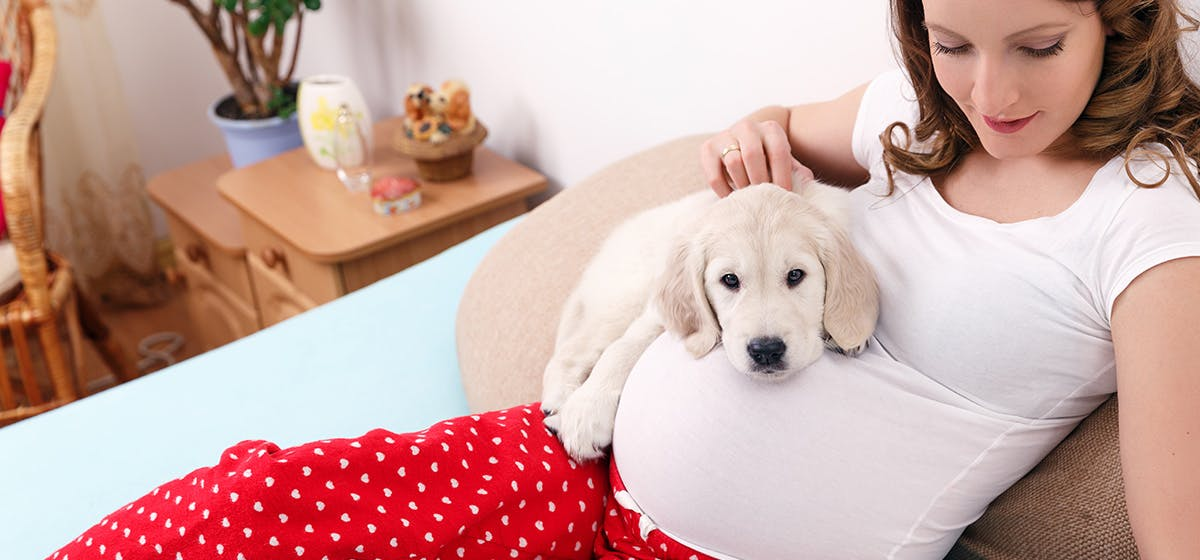 Can Dogs Sense Pregnancy In Humans