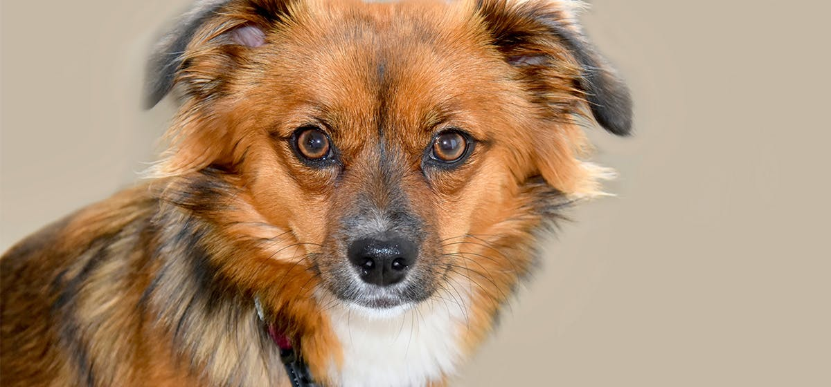 Can Dogs Live With Cataracts Wag