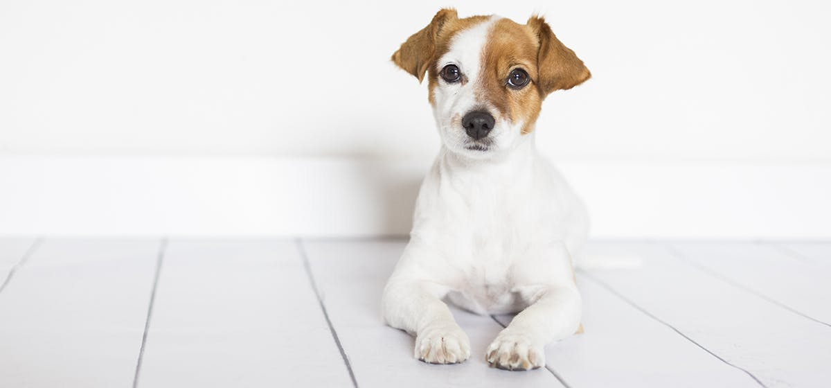 Can i put polysporin drops in my dogs ears