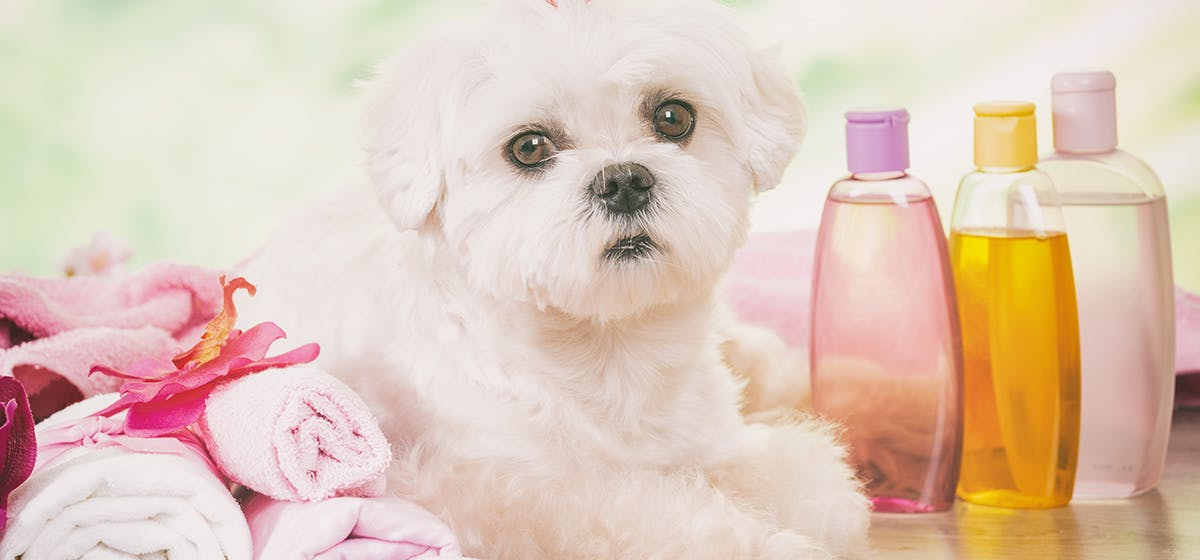 Can Dogs Use Baby Shampoo Wag