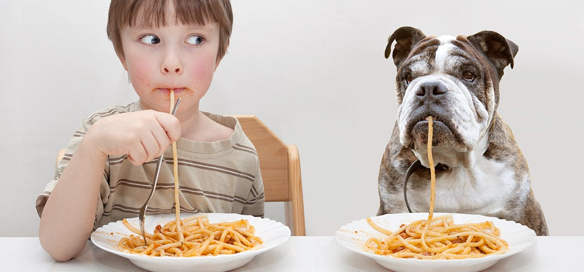 Can Dogs Live Longer Eating Human Food