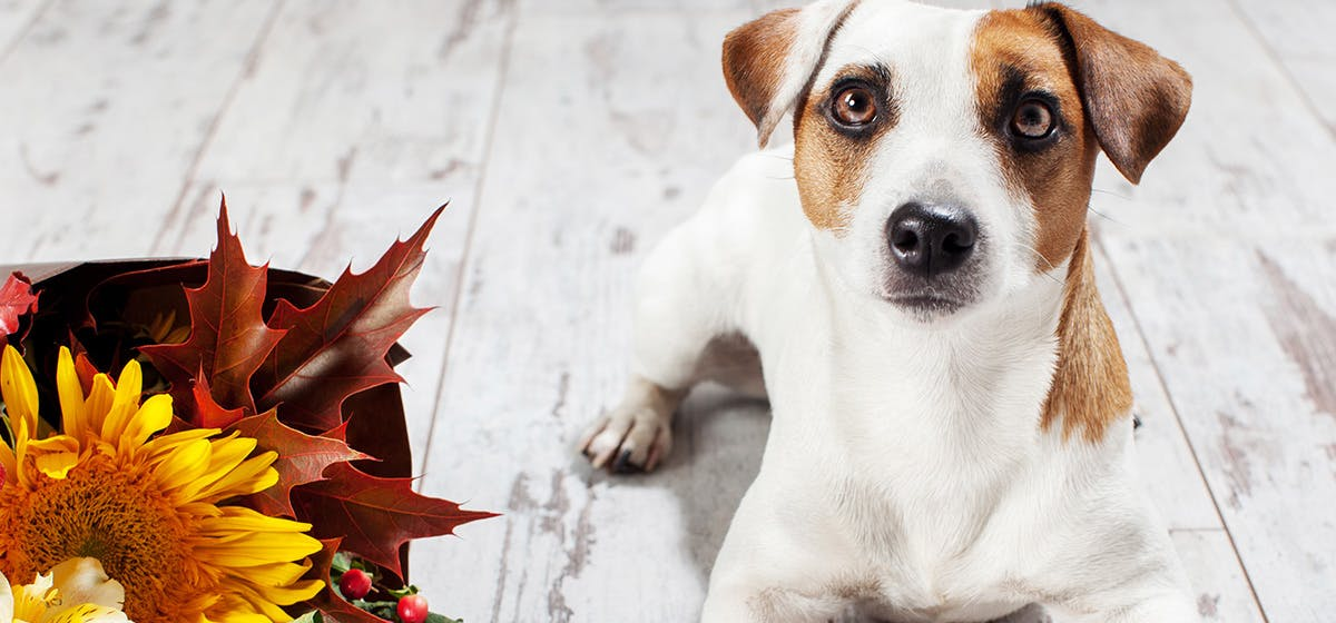 Can Dogs Smell Through Coffee? - Wag!