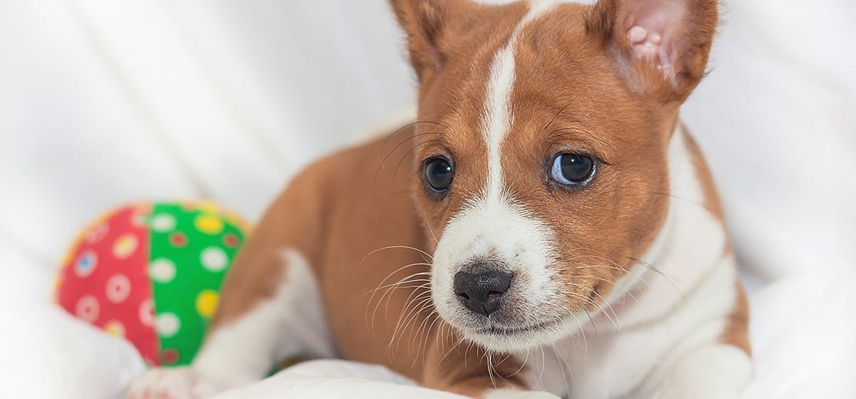 Can Dogs Tell Gender of Humans? - Wag!