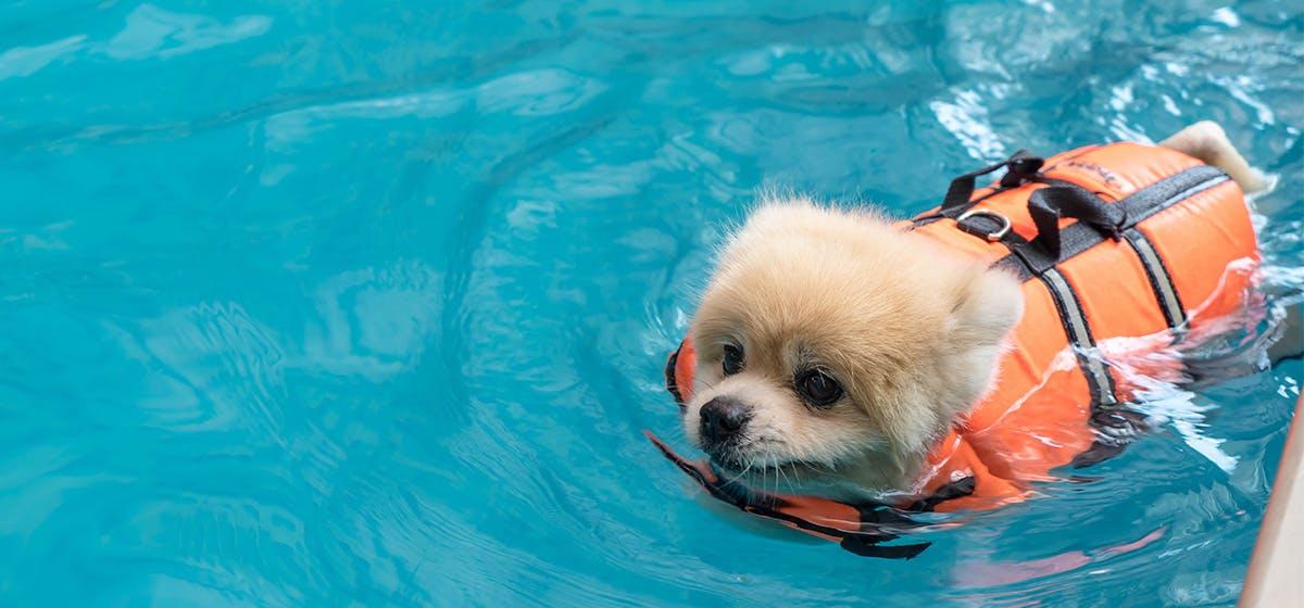 dạy chó tập bơi