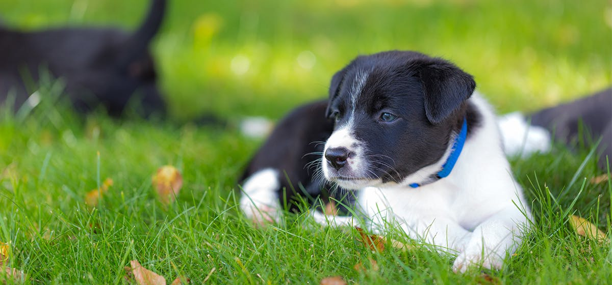 Can Dogs Feel Heat on Their Paws? - Wag!
