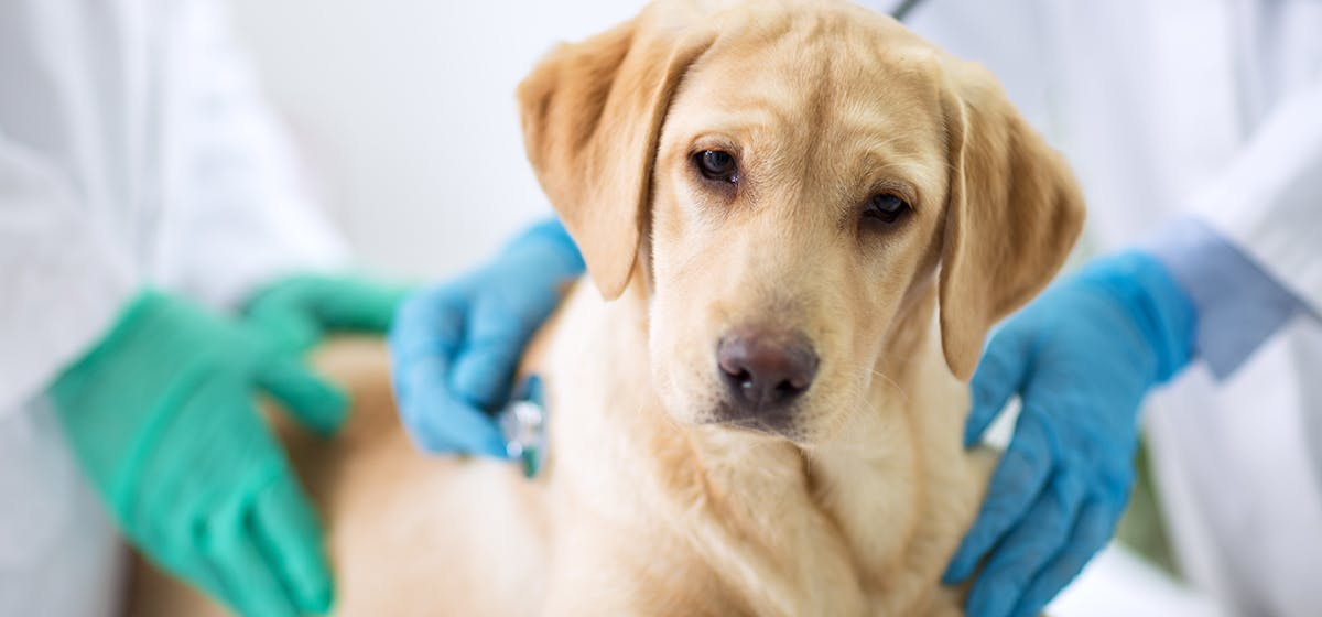 Can Dogs Live with Lyme Disease? - Wag!