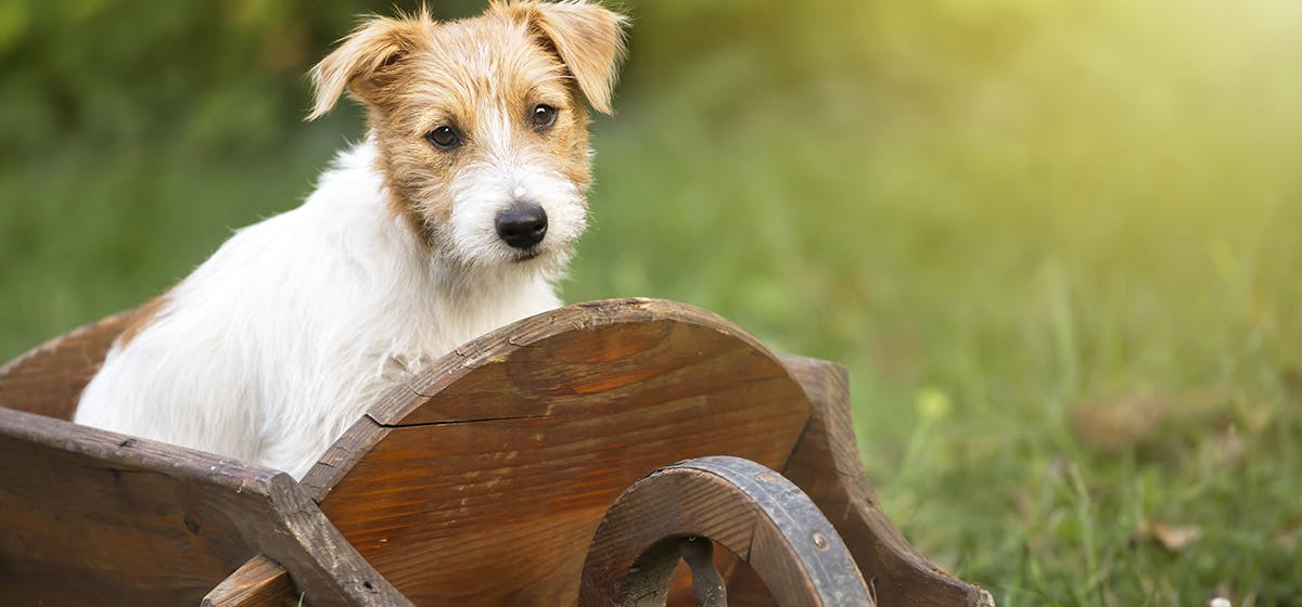 Can Dogs Use Hydrocortisone Cream? - Wag!