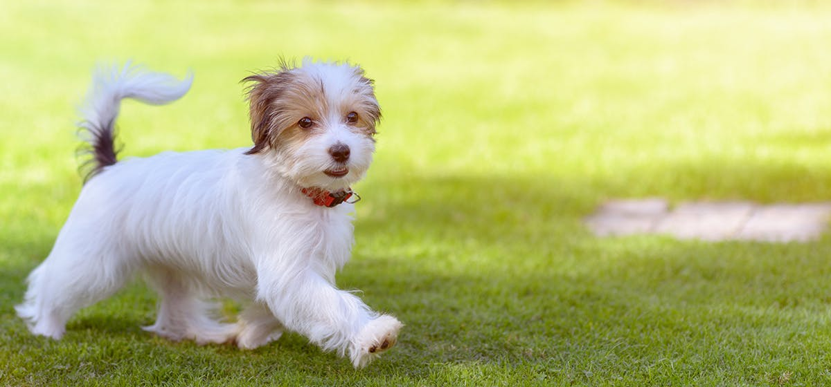 Can Dogs Live with Mast Cell Tumors? - Wag!