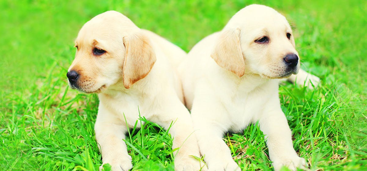 Can Dogs Live Without Mating? - Wag!