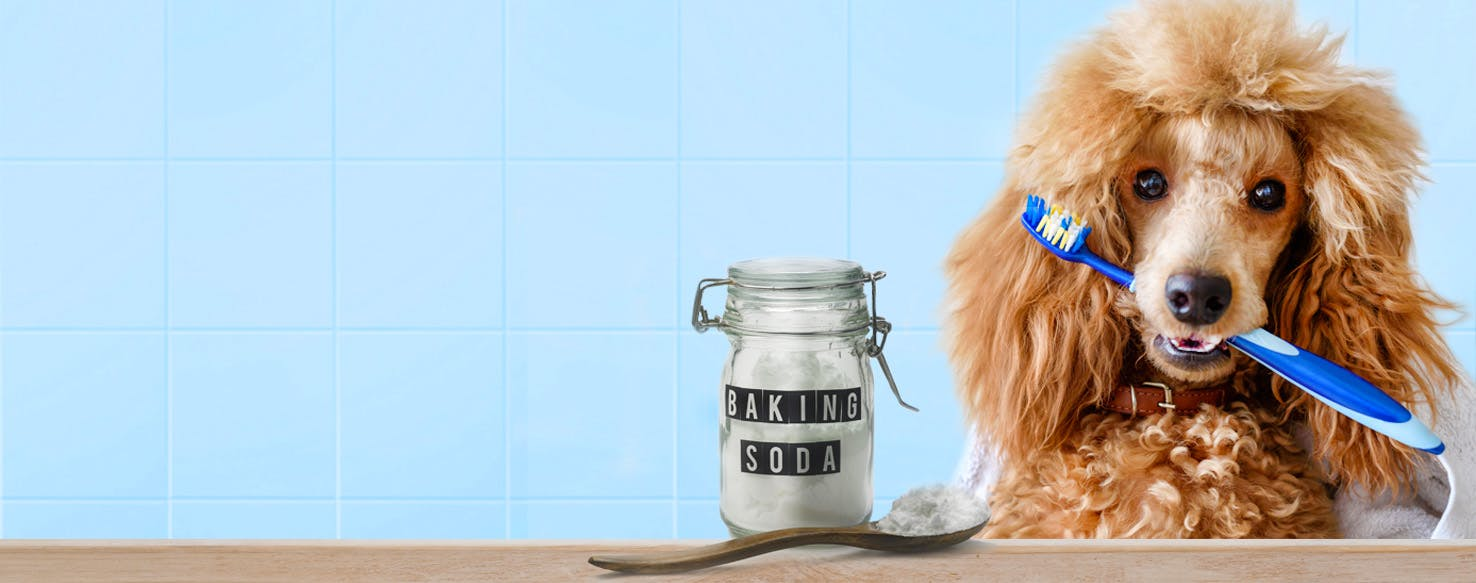 How to Brush a Dog's Teeth With Baking Soda