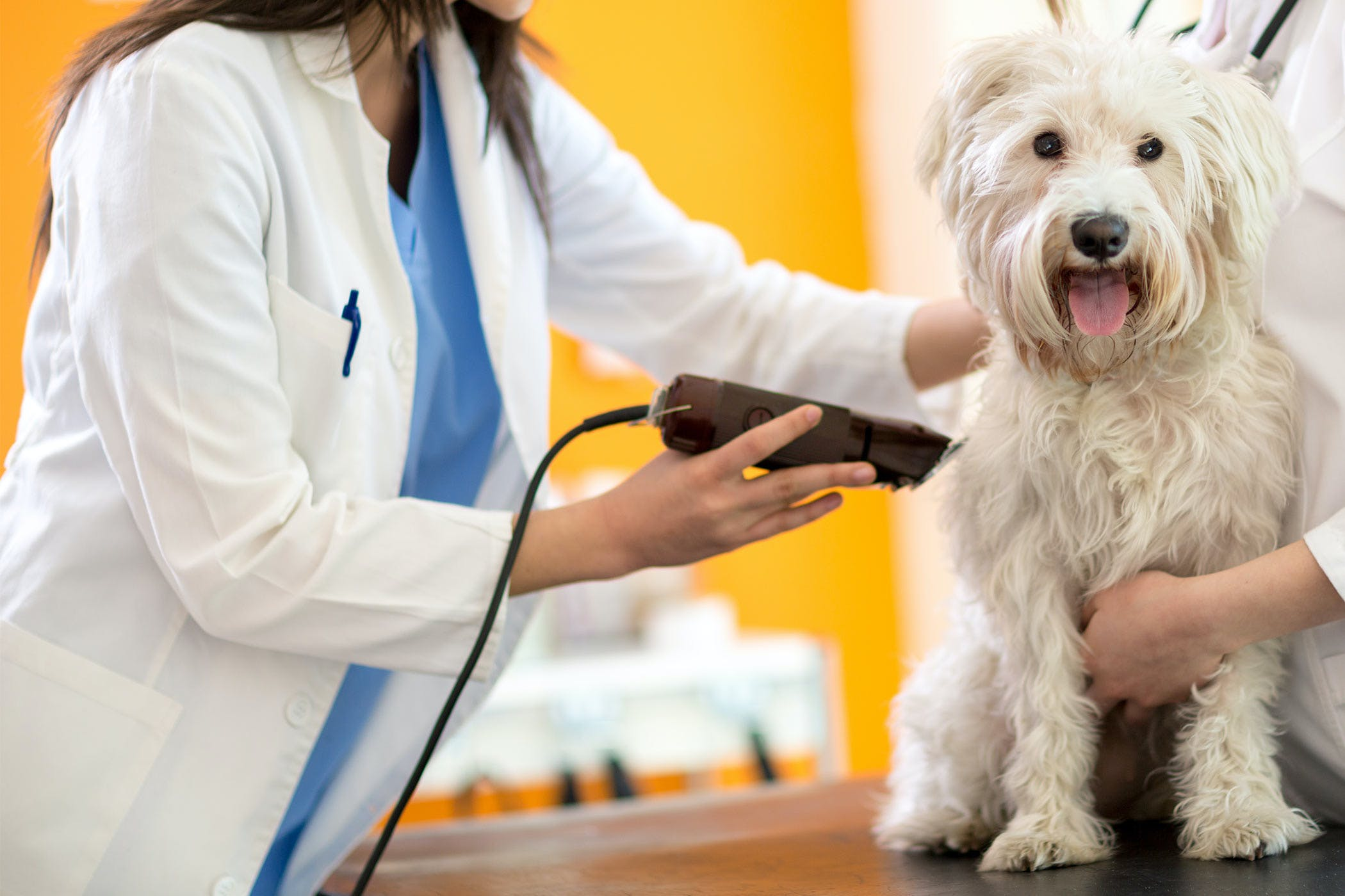 How to groom a dog using clippers solutioingenieria Image collections