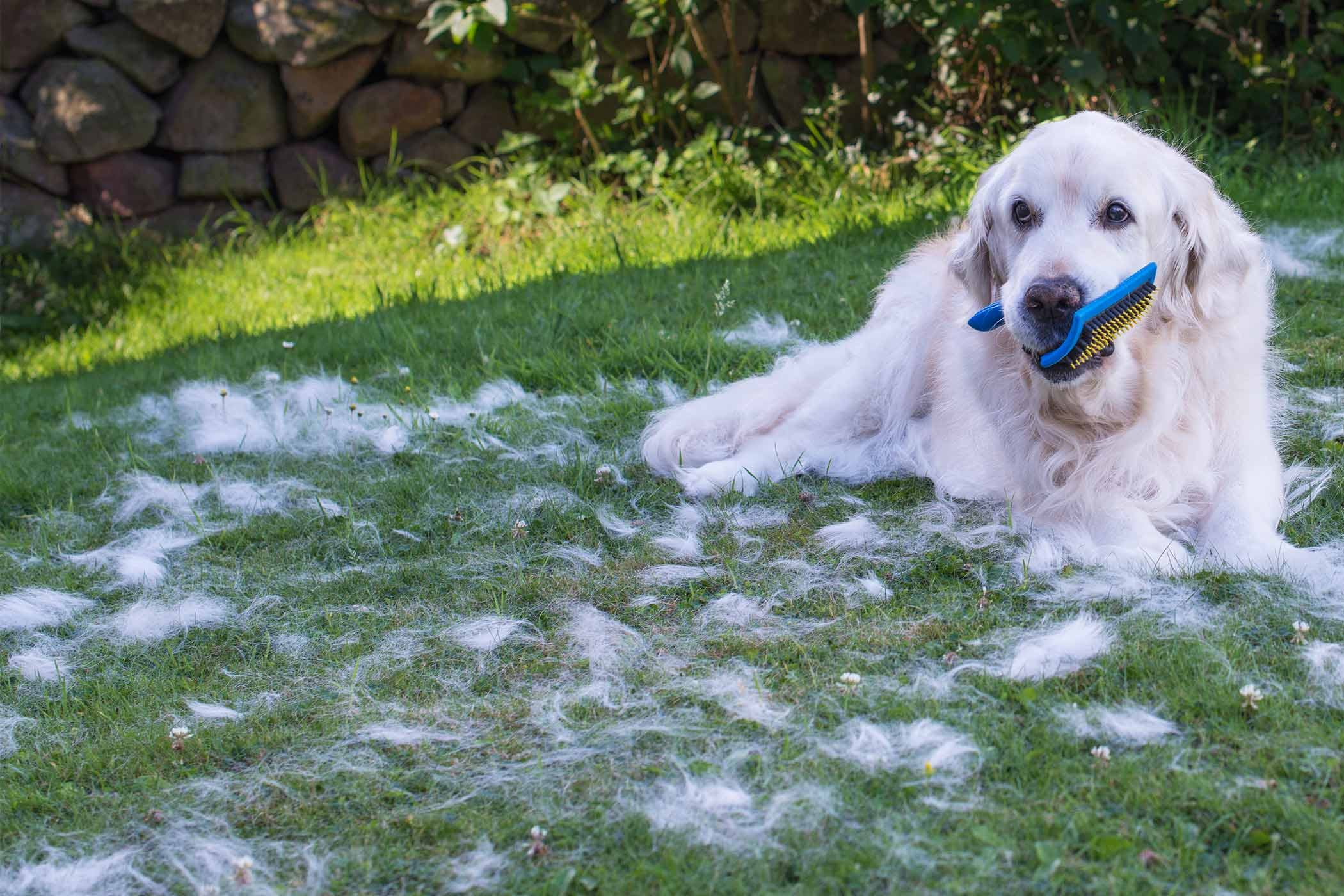 How to groom a dog with a thick undercoat solutioingenieria Image collections
