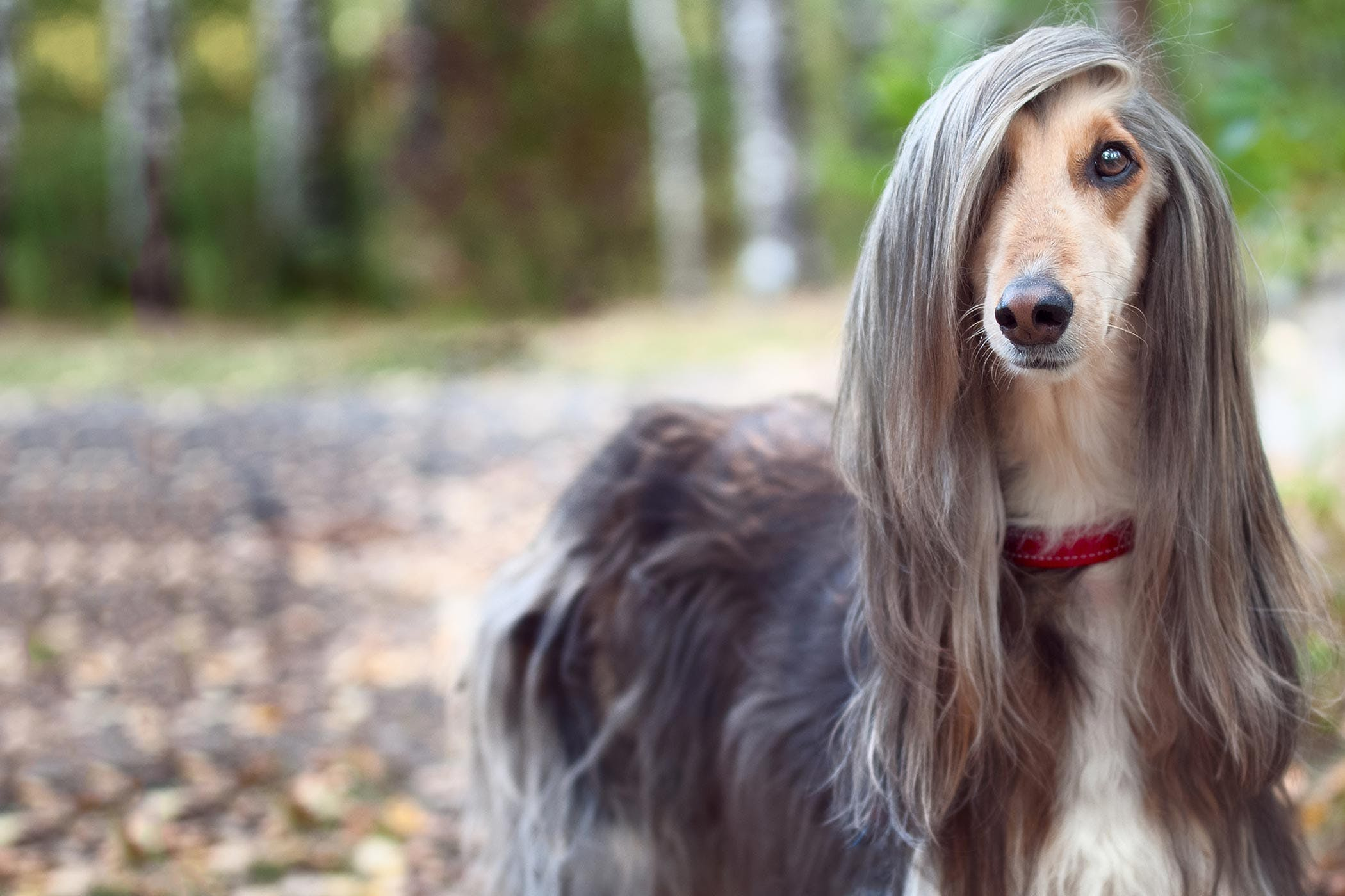 How To Groom A Dog With Long Hair