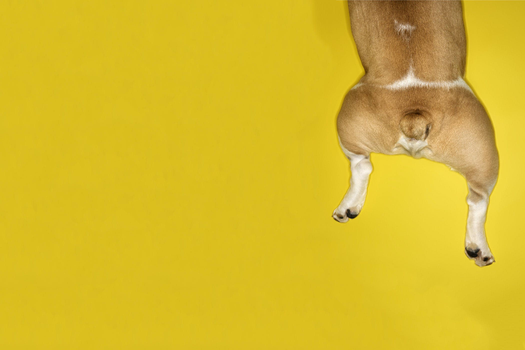How to groom a dogs legs solutioingenieria Image collections