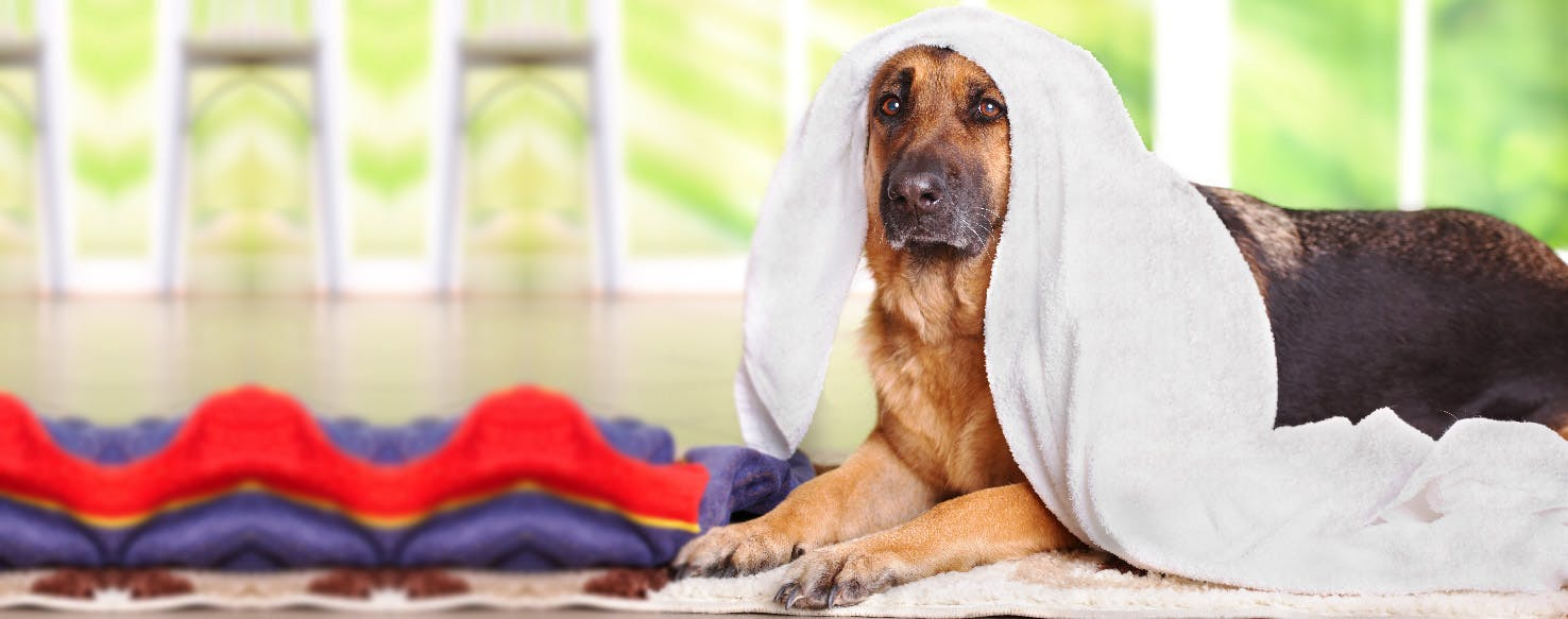 How To Clean A Dog S Scab