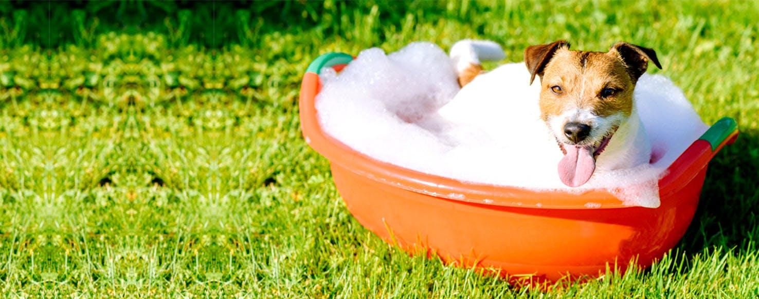 How to Give a Dog an Epsom Salt Bath