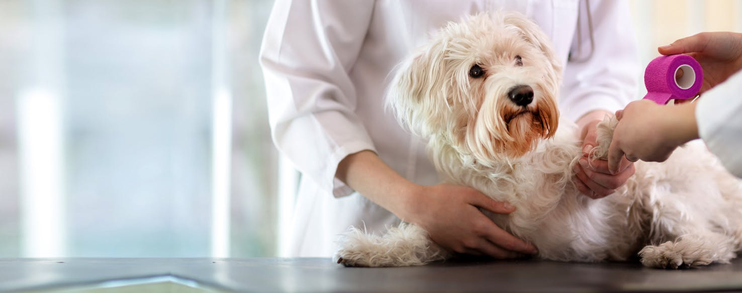 How to Clean a Dog's Wound