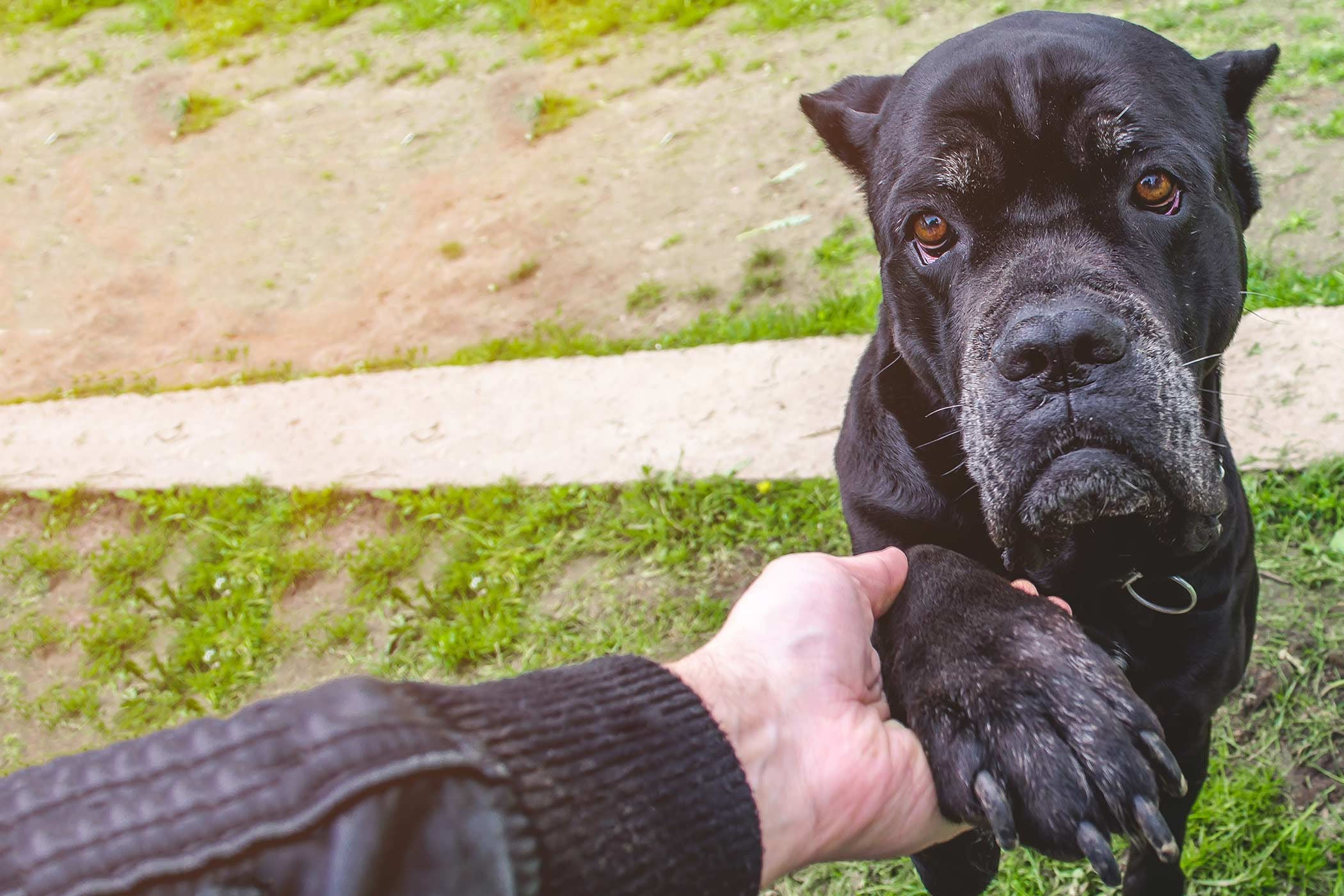 How to Prevent Dog Nails from Splitting